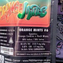 buy jungle boys orange mints #6 online